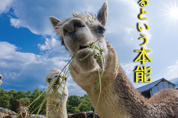 gunjou-food-flier